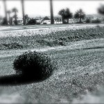 tumbleweed-1